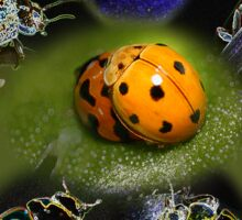 Oneness with Ladybugs Picture in the Centre Sticker