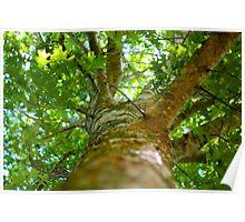 Upper Tree Trunk Poster