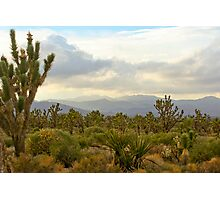 Wee Thump Wilderness, NV Photographic Print