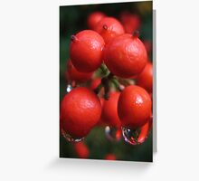 Holly Berries in the Rain Greeting Card