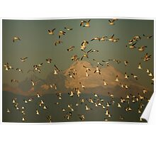Bird Flock Poster