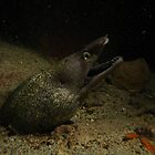 Moray Eel by George Cathcart
