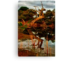 """""""Aging Reflections"""" Canvas Print"""