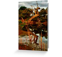 """Aging Reflections"" Greeting Card"