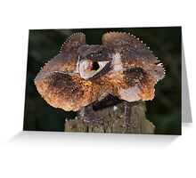 Frilled dragon Greeting Card