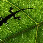 Gecko silhouette  by Stewart Macdonald