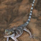 Ring-tailed gecko by Stewart Macdonald