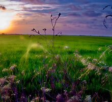 Summer Colors by Manuel Gual