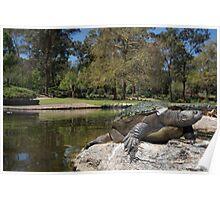 Brisbane River turtle Poster