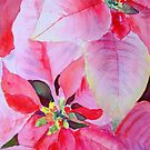 Christmas Poinsettia by Ruth S Harris