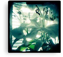White lilies photograph Canvas Print
