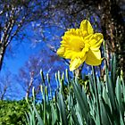 Happy St David's Day by Susie Peek