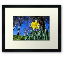Happy St David's Day Framed Print
