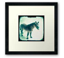 Little horse Framed Print