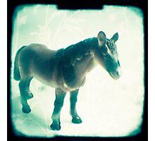 Little horse Photographic Print