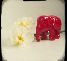 Little elephant by gailgriggs