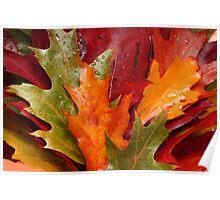 American oak leaves Poster