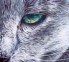 Russian Blue by Elena Kolotusha
