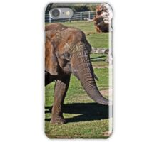 Cuddles Searching For Snacks iPhone Case/Skin
