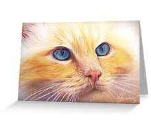 Sunny Cat Greeting Card