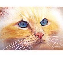 Sunny Cat Photographic Print