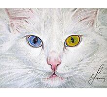 Unbelievable Cat Photographic Print