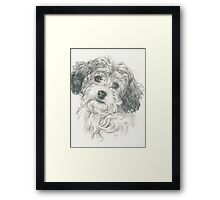 Another Cavachon  Framed Print