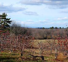 Winter Orchard by Anne Smyth