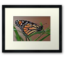 Today's Birth Framed Print