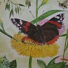 RED ADMIRAL - water colour by Marilyn Grimble