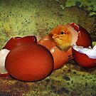 Who was first ? The egg, or the chicken ?  by Bine