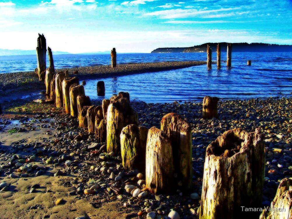 Picnic Point Pilings 2 by Tamara Valjean