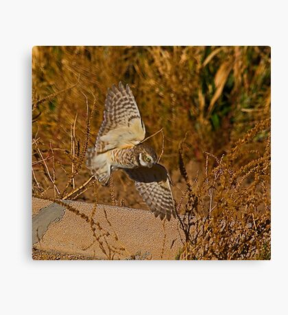 Burrowing Owl In Flight Canvas Print