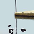 Zen Ducks by WildestArt