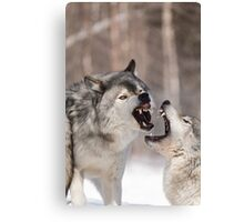 Timber wolves in winter Canvas Print