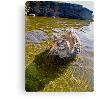Aiko Swims Canvas Print