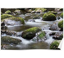 Taggerty River near Marysville Poster
