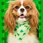 Kiss The Irish Cavalier King Charles Spaniel Puppy  by daphsam
