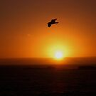 Seagull Silhouette by TaGiRoCkS
