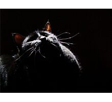 Black Kitty In Starlight Photographic Print