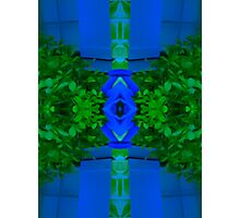 Blue and Greenery Photographic Print