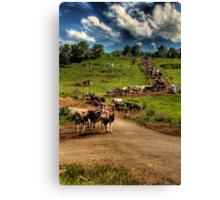 Cattle train Canvas Print