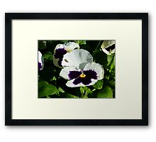 Fly On A Pansy Framed Print