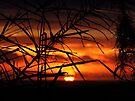 """Warm Dawn"" by debsphotos"