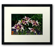 Purple And White Lilies Framed Print