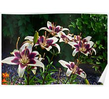 Purple And White Lilies Poster
