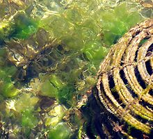 Craypot in shallow water - Currie Harbour King Island tTsmania by Peterzphotoz