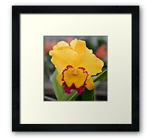Bright Yellow and Red Orchid Framed Print