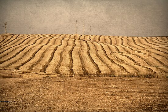 lines of field by Victor Bezrukov