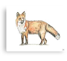Fox watercolour and ink Canvas Print